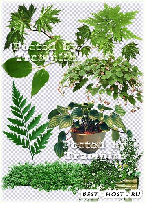 Зеленые листья, веточки, цветы в горшках - Клипарт на прозрачном фоне в Png