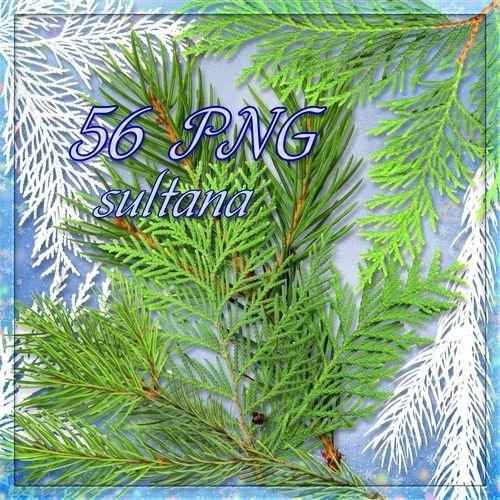 Клипарт в PNG - Веточки елки и туи