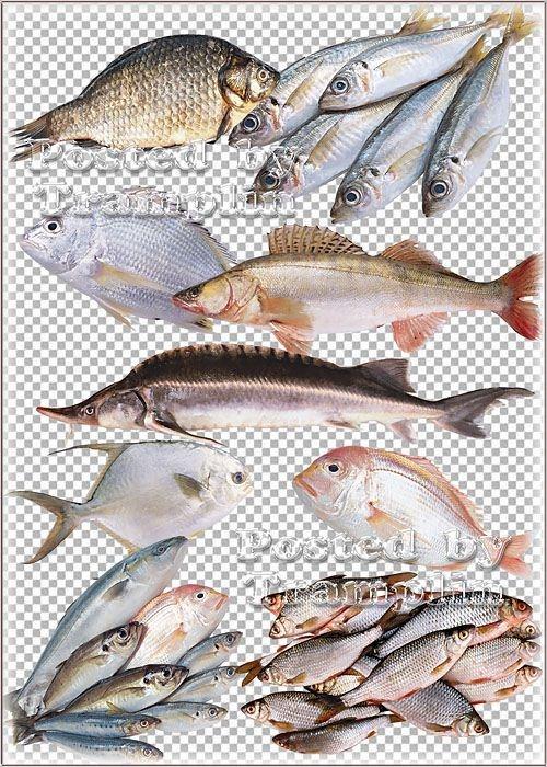 Клипарт – Рыба