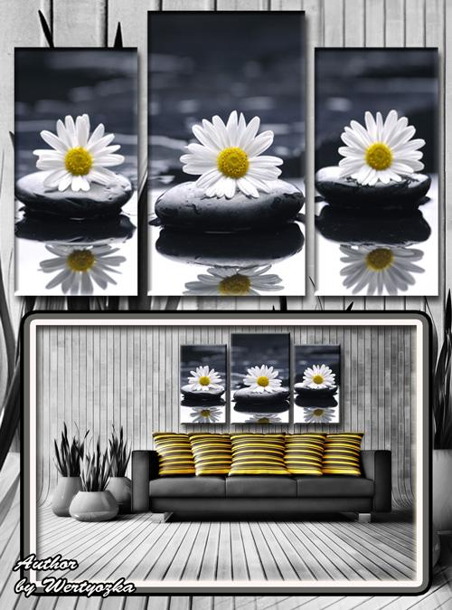 Белые ромашки, камни, капельки, отражение, спа - Триптих в psd формате