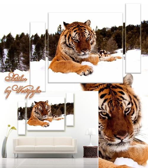 Тигр - PSD исходник триптих, модульная картина для интерьера