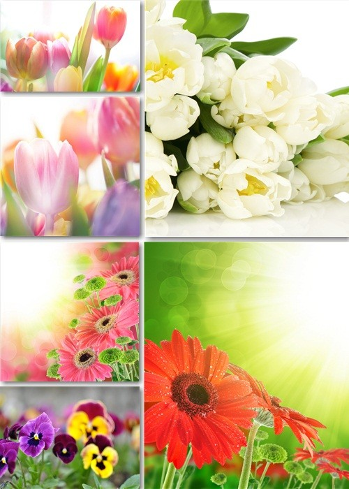 Растровый клипарт - Весенние цветочные фоны