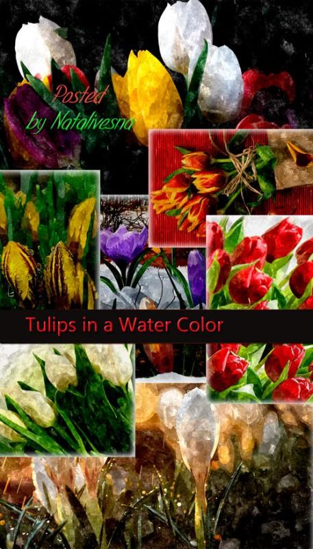 Фоны – Весенние тюльпаны