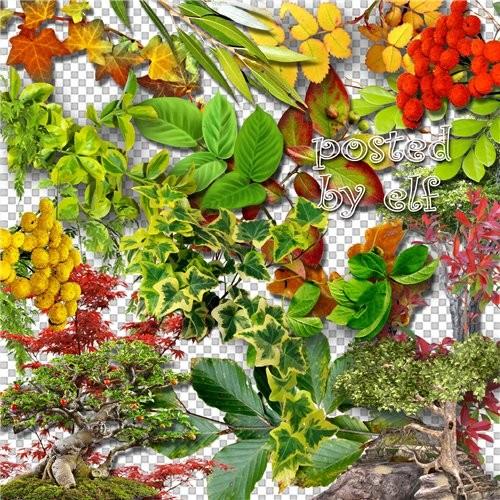 Зелёная листва на прозрачном фоне