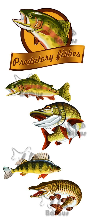 Predatory fishes / Хищная рыба