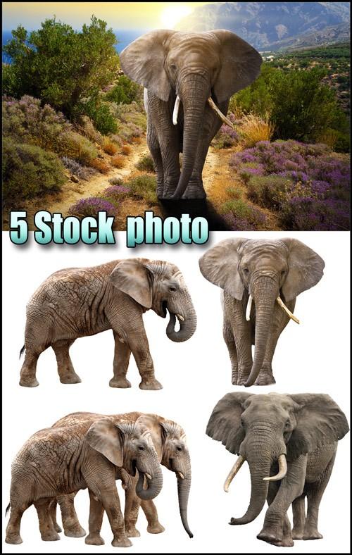 Слоны на белом фоне, слон на фоне природы - растровый клипарт
