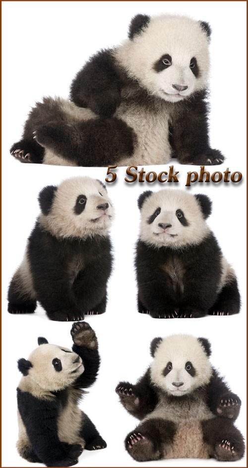 Панда, бамбуковый медведь - растровый клипарт