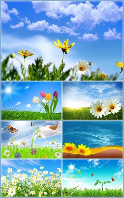 Летние цветочные фоны