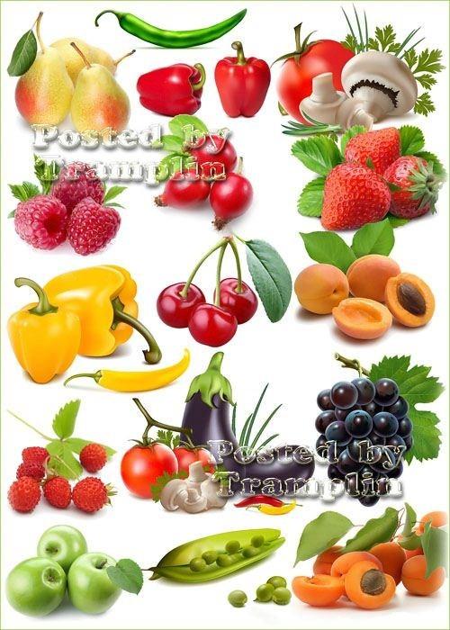 Клипарт – Овощи, фрукты, ягоды, грибы