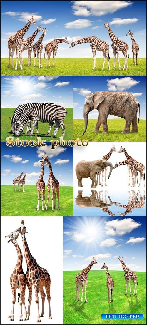 Животные на фоне природы / Animals on nature background - raster clipart