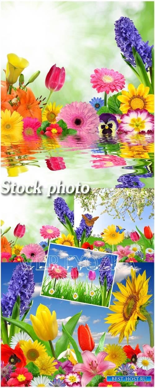 Цветы / Flowers, butterflies, nature