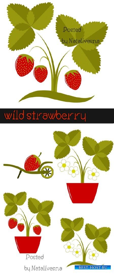 Земляника в Векторе / Vector - Wild strawberry