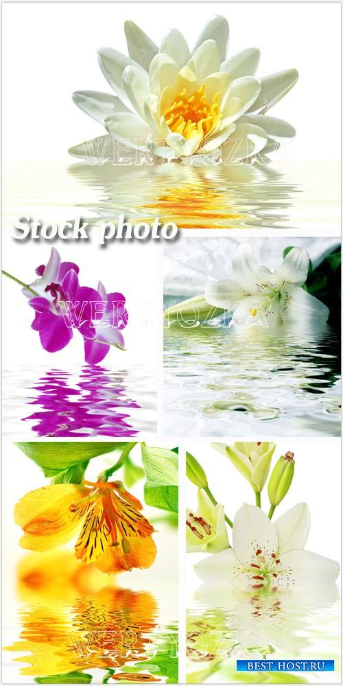 Лилии и орхидеи / Flowers, lilies, orchids