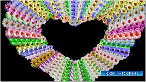 Футаж с альфаканалом - Сердце из ромашек