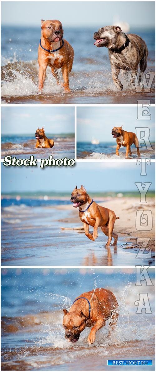 Прогулка с собакой по берегу моря / Walking the dog on the beach - raster clipart