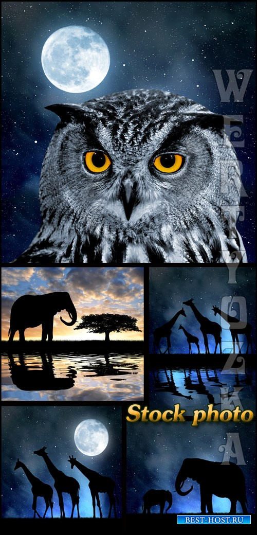 Сова, слон, жираф на фоне ночного неба / Owl, elephant, giraffe against the night sky - raster clipart