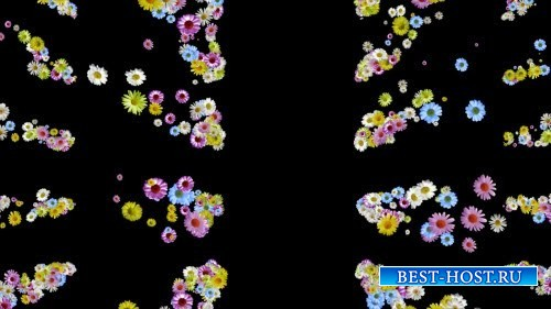 HD футаж Цветы для тебя (вертикаль)