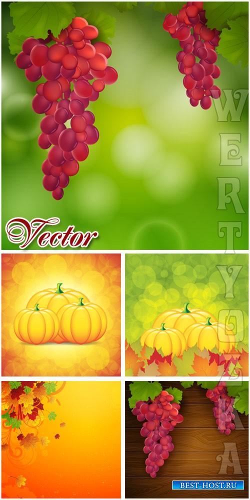 Осенние фоны с виноградом и тыквой / Autumn background with grapes and pump ...