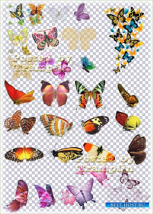 Клипарт на прозрачном фоне – Бабочки расселись как цветные фантики