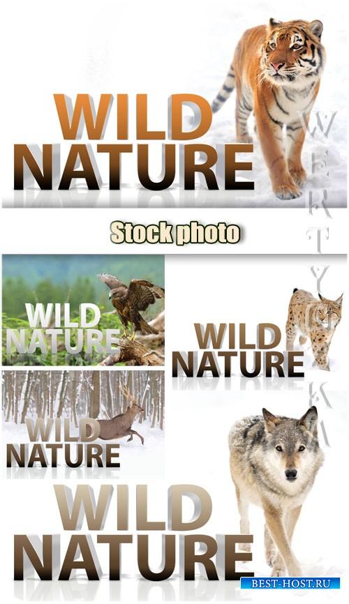 Дикая природа, тигр, волк, рысь, орел, олень / Wild nature, tiger, wolf, lynx, eagle, deer - Raster clipart