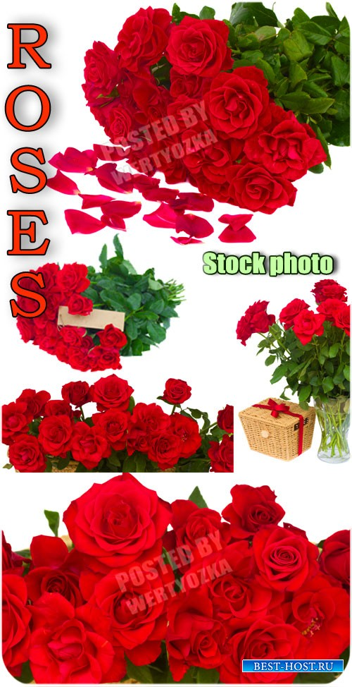 Розы, букеты роз, цветы / Roses, bouquets of roses, flowers - Raster clipar ...