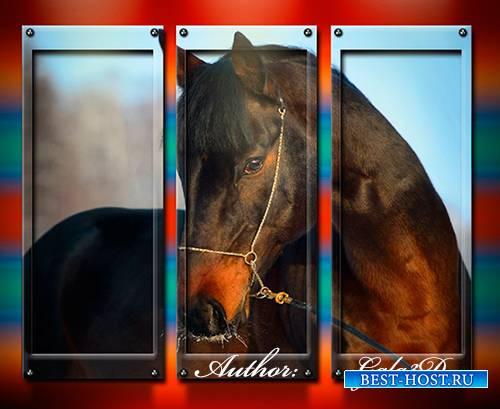 Триптих в psd формате - Коричневая лошадь