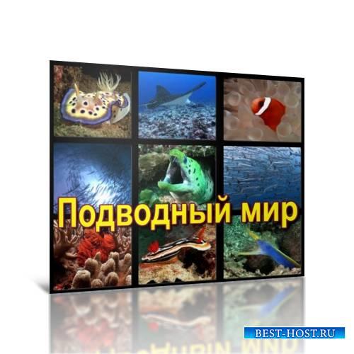 Подводный мир [AVI]