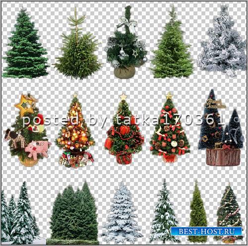 Клипарт для фотошопа - Ели для создания и дизайна новогодних работ