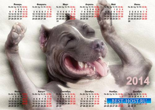 Календарь с животными - Забавная собачка