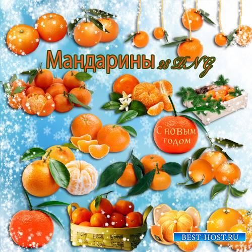 Клипарт - Мандарины