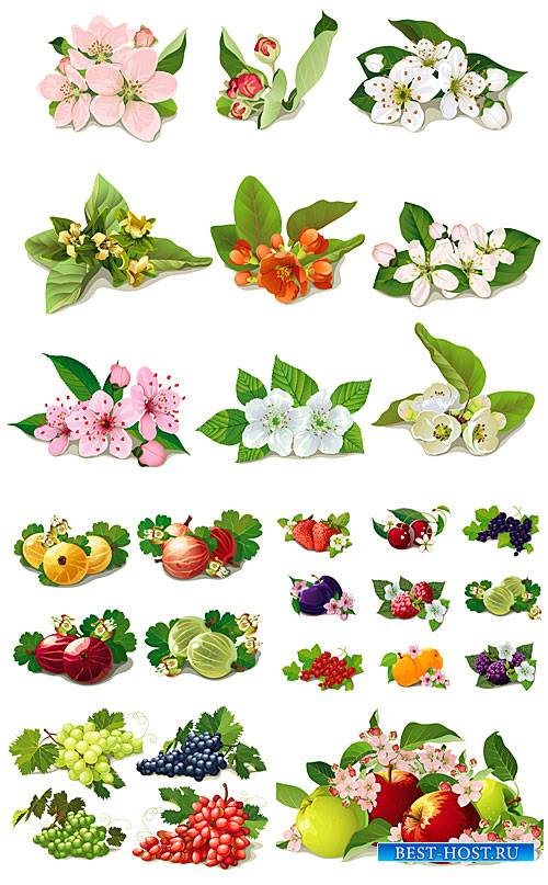 Весенние цветы, фрукты и ягоды в векторе / Spring flowers, fruits and berries vector