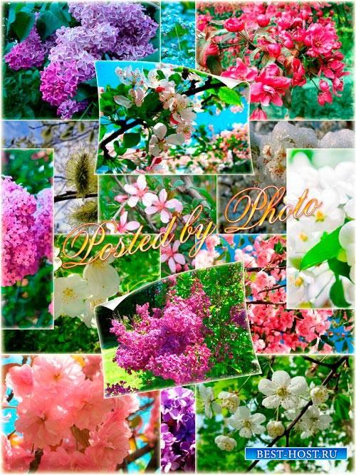 Растровый клипарт - Весна