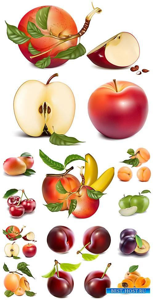 Фрукты и ягоды в векторе, груша, слива, яблоко / Fruits and berries vector, pear, plum, apple