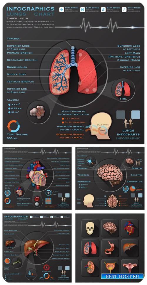 Медицина, инфографика в векторе / Medicine, infographics vector