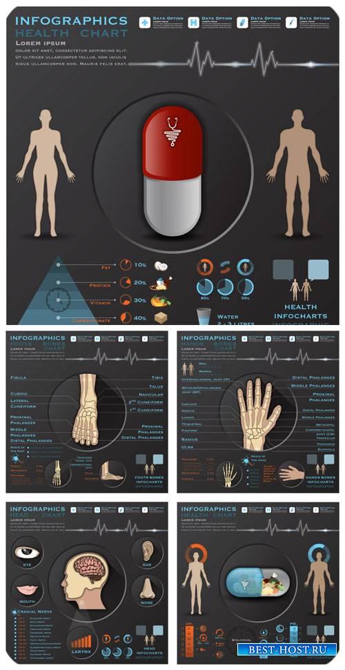 Медицина, анатомия, инфографика в векторе / Medicine, anatomy, infographics ...