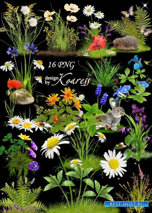 Цветочные png кластеры для фотошопа с полевыми и лесными цветами - Цветочна ...