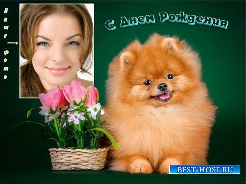 Рамка для фотошоп - Пушистая собачка с букетом цветов