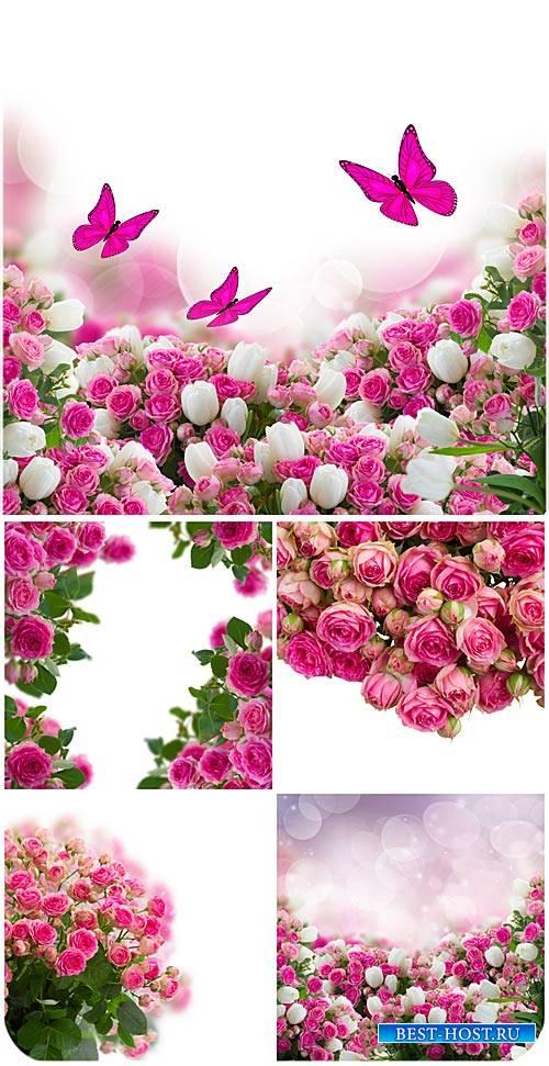 Розы, фоны с цветами и бабочками / Roses, backgrounds with flowers and butterflies - Stock photo