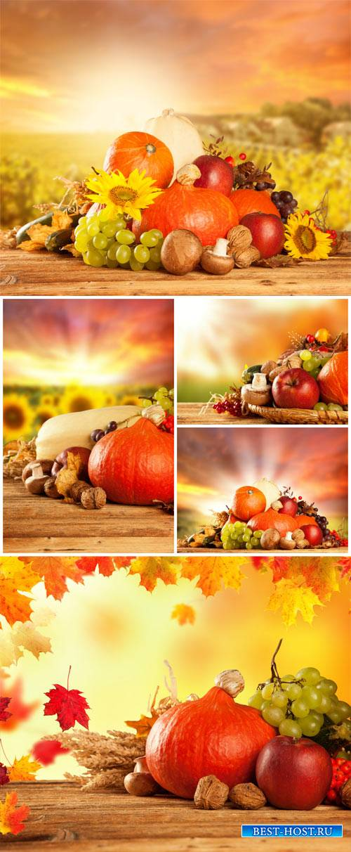 Осенние фоны, осенний урожай / Autumn background, fall harvest - Stock photo