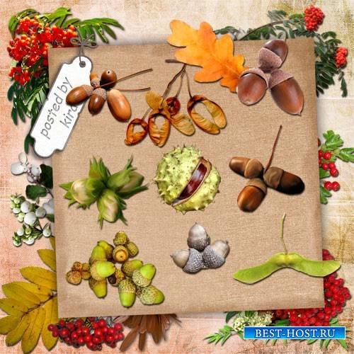 Клипарт в png - Дикие осенние плоды