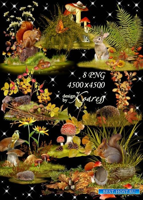 Осенние композиции для дизайна с цветами, ягодами, листьями, грибами - В тишине лесных полян