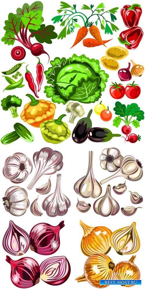 Овощи в векторе, лук, чеснок / Vegetables vector, onions, garlic
