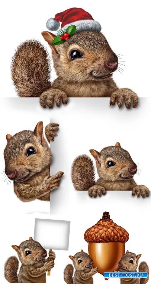 Белка с белым плакатом / Squirrel with white placard - Stock photo