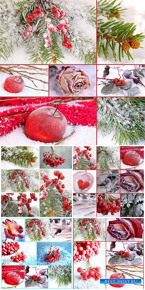 Winter collage, viburnum, tree branches, red rose - stock photos