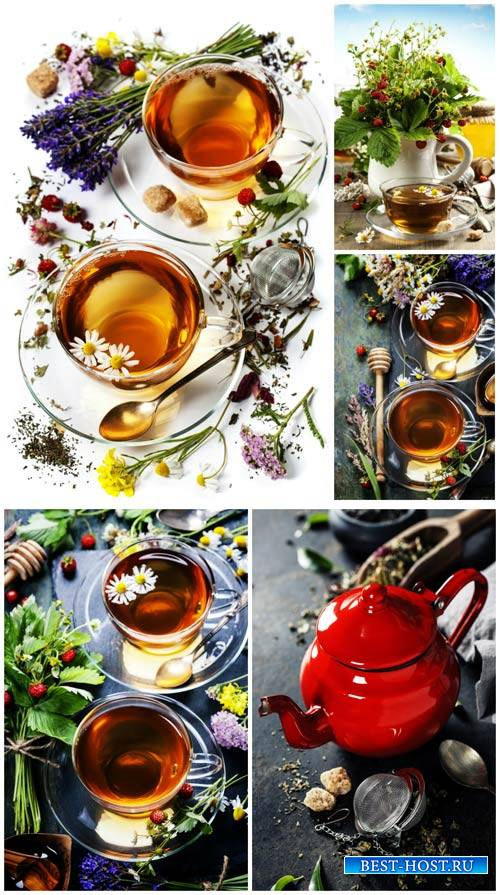 Tea with berries and herbs - Stock Photo