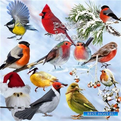 Птички-невелички - Png клипарт