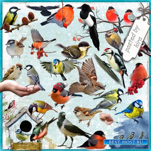 Клипарт в png - Зимующие птицы