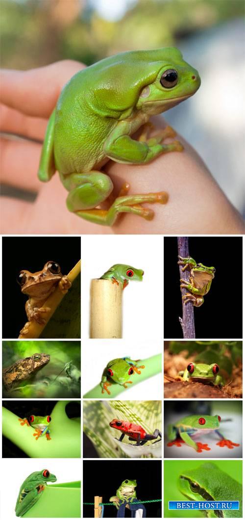 Frogs # 2 - stock photos