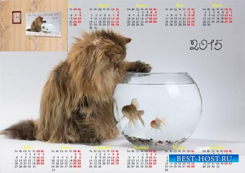 Календарь 2015 - Кошка и рыбки