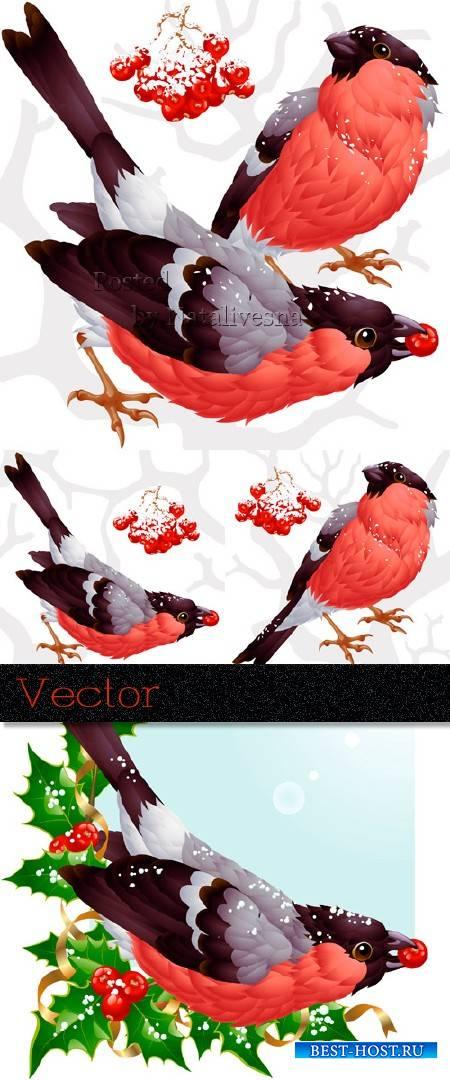 Зимнии птицы в Векторе  -  Снегири и грозди рябины